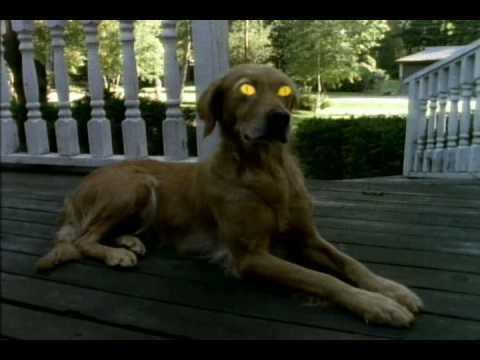 goosebump-dog-goosebumps-14576958-480-360